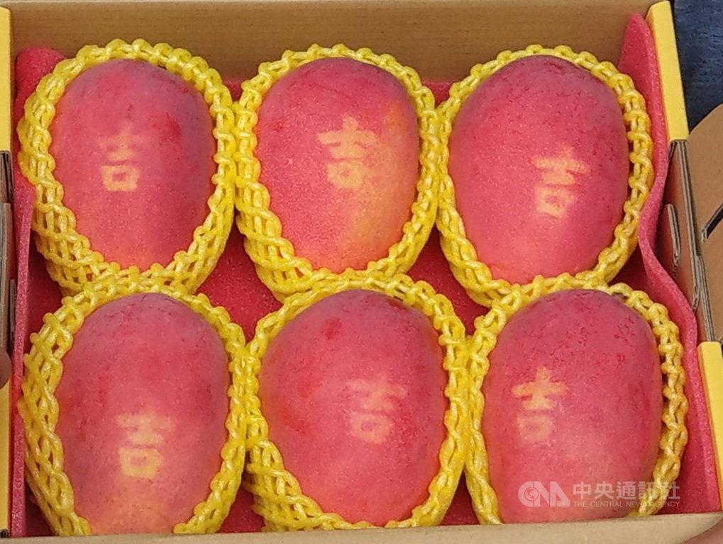 土芒果 潘連進 蜜雪芒果 挽菓子