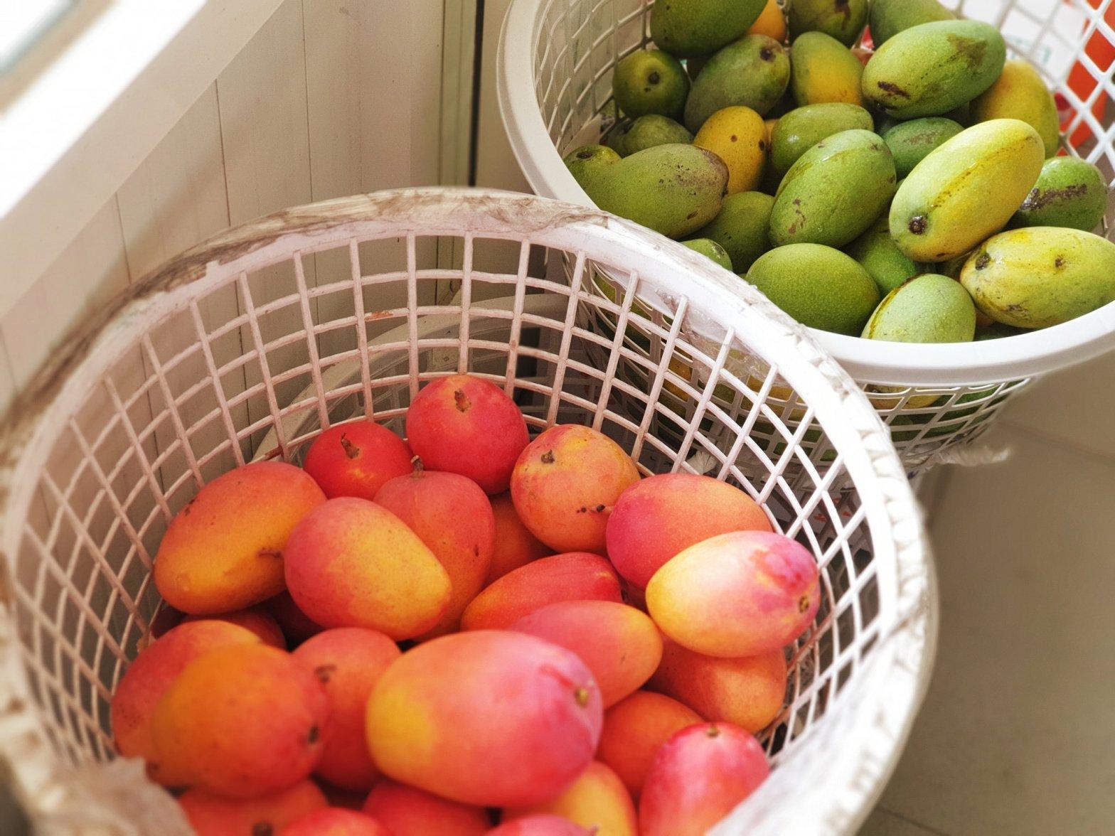 珍翠番石榴 珍翠芭樂 高雄2號 挽菓子 潘連進 高雄四號 蜜雪芒果 翡翠芒果 果實 種苗 水果